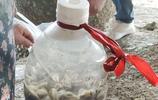 青島膠州灣八廠海泥螺豐產市民撿滿桶