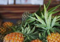 吃肉多了,吃塊菠蘿能消積化食。你知道還有其他什麼玄機嗎?