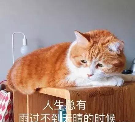 大橘就是披著貓皮的豬,這種體型需要小心了