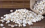 薏米營養又養生,可是大與小營養價值卻不同,你知道嗎?