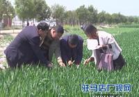 西平:全力做好小麥條鏽病防控工作