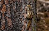 香格里拉普達措國家公園,那些可愛的精靈小松鼠