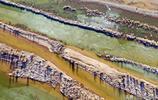 實拍黃河內蒙段開凌系列三:黃河漸開,兩岸溼地迎來數以萬計候鳥