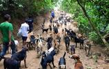 """時隔一年再次造訪哥斯達黎加的""""狗島"""""""