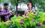 河南安陽:人民公園邀您週末賞牡丹