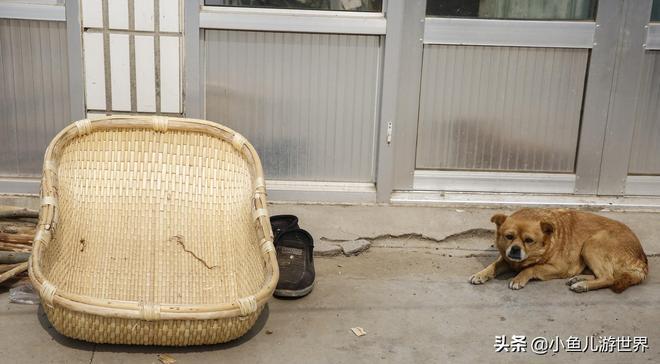 山東農村76歲老人幹活場所稀罕,一天掙30多元,一家五口全靠他