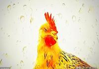 伊索寓言|母雞與燕子