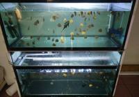 飼養觀賞魚不學會困水,即使開缸也養不好水!