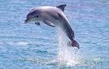 大自然的水上運動冠軍