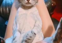 為了清涼將貓咪剃光光?喵擺出臭臉質問,這讓我怎麼出門見人啊
