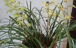 很多新手花友不知道怎麼選擇一盆好的蘭花,今天來說說選蘭要決