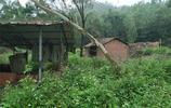 實拍東莞山邊一間養殖場:野草叢生,任其荒棄,你怕嗎?