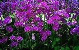 植物圖集:蝴蝶蘭植物美圖