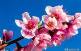南京桃花最美的4個地方,很多人只知道其中3個