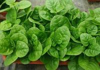 """它是綠葉蔬菜,卻被稱為""""木耳"""",您吃過嗎?"""