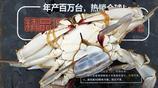 一斤重個頭梭子蟹40塊錢一斤 半斤以下20塊錢隨便挑 梭子蟹便宜了