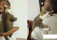 別再說奶奶養的貓胖了,爺爺養的貓更胖