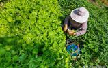 手機攝影圖集:真實記錄鄉村影像,還原農村生活點滴