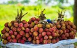 越南荔枝大豐收,外銷全球30個國家,向中國出口1.1萬噸