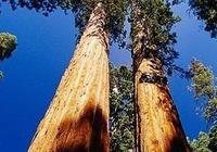 紅木的淵源,為什麼紅木這麼貴?