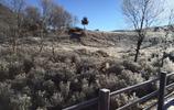 香格里拉普達措森林 的冬季 出奇的冷