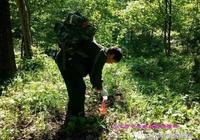 輝南森經局完成春季森林鼠害防治工作