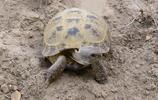 動物圖集:四爪陸龜
