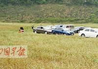 隆安更望湖:遊客亂來惹人煩 村民涉嫌亂收費