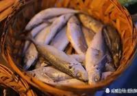 它與稀飯是絕配,肉質水煮不爛,晒乾一斤13元堪稱最便宜海鮮