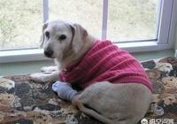 我的狗狗9歲了,突然沒有了安全感和人寸步不離,要不東躲西藏,這是怎麼回事,怎麼辦?
