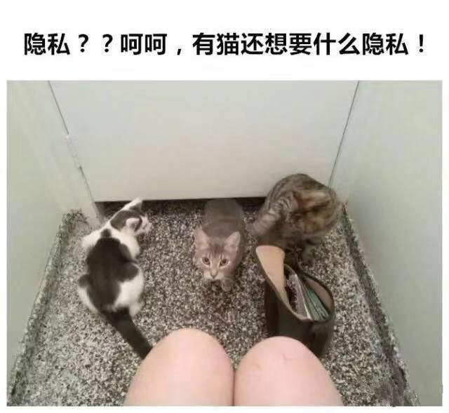 貓咪的日常,你有中槍嗎?