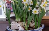 12星座專屬花種,天秤座是牡丹,白羊居然是雛菊,雛菊,雛菊