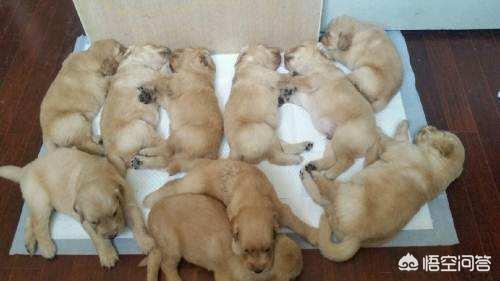 狗狗一生分為多少個時期,怎樣餵養才正確呢?