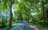 武漢這座湖可與杭州西湖媲美,比西湖更大也是5A景區