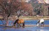 世界名馬鑑賞 之 雲南馬