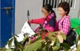 45歲海霞回老家與夥伴幹農活差距太大,女主持人臺上臺下的區別