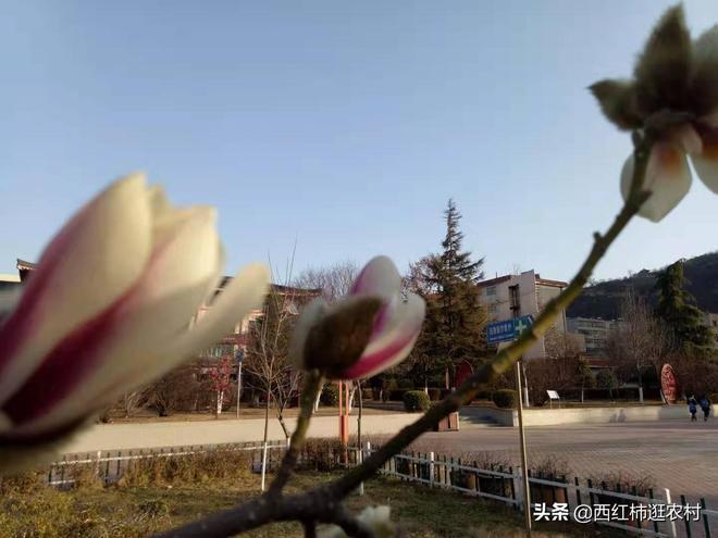 2019年彬縣的春天來了,整天忙碌的你看到了嗎?
