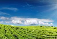 什麼是生態農業、綠色農業、有機農業?有機食品、綠色食品呢?
