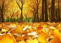 秋意濃,秋風涼,不念過往,不憶憂傷………