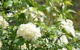 你們經常送花,知道這些花兒的含義嗎?