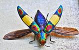 小昆蟲的大世界
