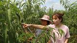 女大學生返鄉種桃千畝稱 帶領鄉親致富