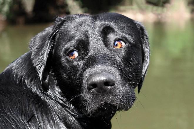 狗只能看到黑白色?這些事聽起來像是真的,實際上卻並不正確!