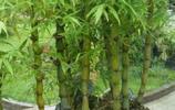 現在的植物真是高級,第2款我都沒見過,看完第6,我愣住了