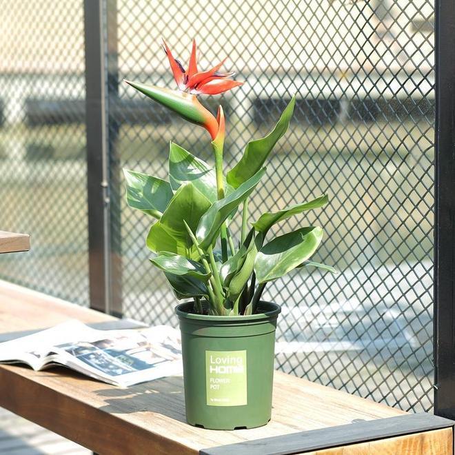請堅信霧霾終會散!6款盆栽綠植,幫你守護家居新環境