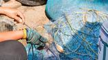 泰國人賣梭子蟹,都要在上面挖個洞,瞭解原因後,網友:扎心了!