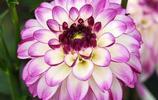 家中的花苗你們都種植對了嗎?讓你做個會生活懂生活愛花的人