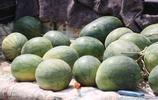 57歲農民大哥大集上自產自銷20畝西瓜,村民買小的,2毛錢一斤
