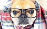 法國鬥牛犬,我的小可愛0.0