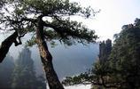 湖南——郴州莽山
